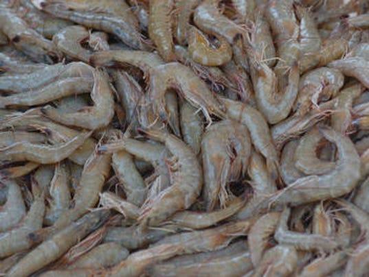 shrimp season