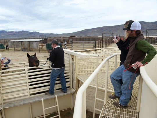 Horse trainer Kirk Ferris, right, and his wife Jacky get a good look at their wild mustang before loading him into their trailer at the Palomino Valley Wild Horse and Burro Adoption Facility north of Reno on March 4, 2016.