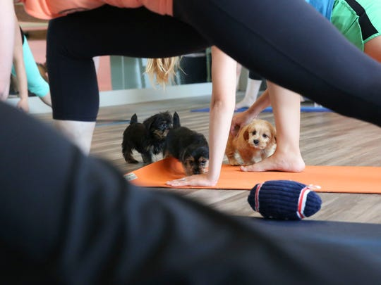 Pit Bulls of St. Francis and SixPax Fitness will host Puppy Yoga and give seven adoptable puppies a chance to find their forever home.