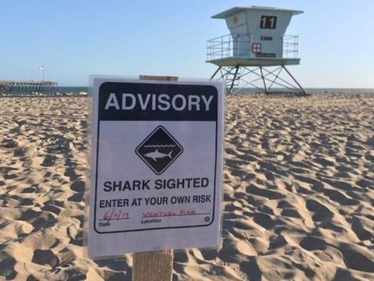 #stockphoto shark
