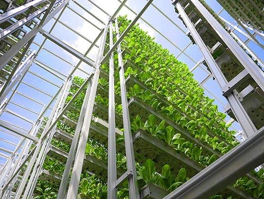 635818139439739432-Vertical.Growing.2
