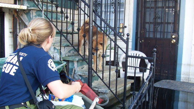 Arizona Humane Society rescuer Liz Truitt tries to coax a dog to safety. Truitt joined a team of animal rescuers in the aftermath of of Hurricane Katrina. The Arizona teams saved more than 300 animals.