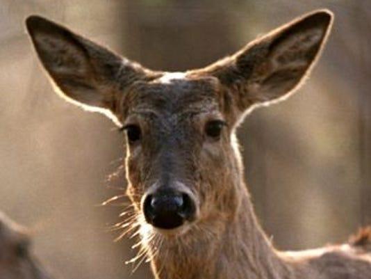 636045157026443730-deer.jpg
