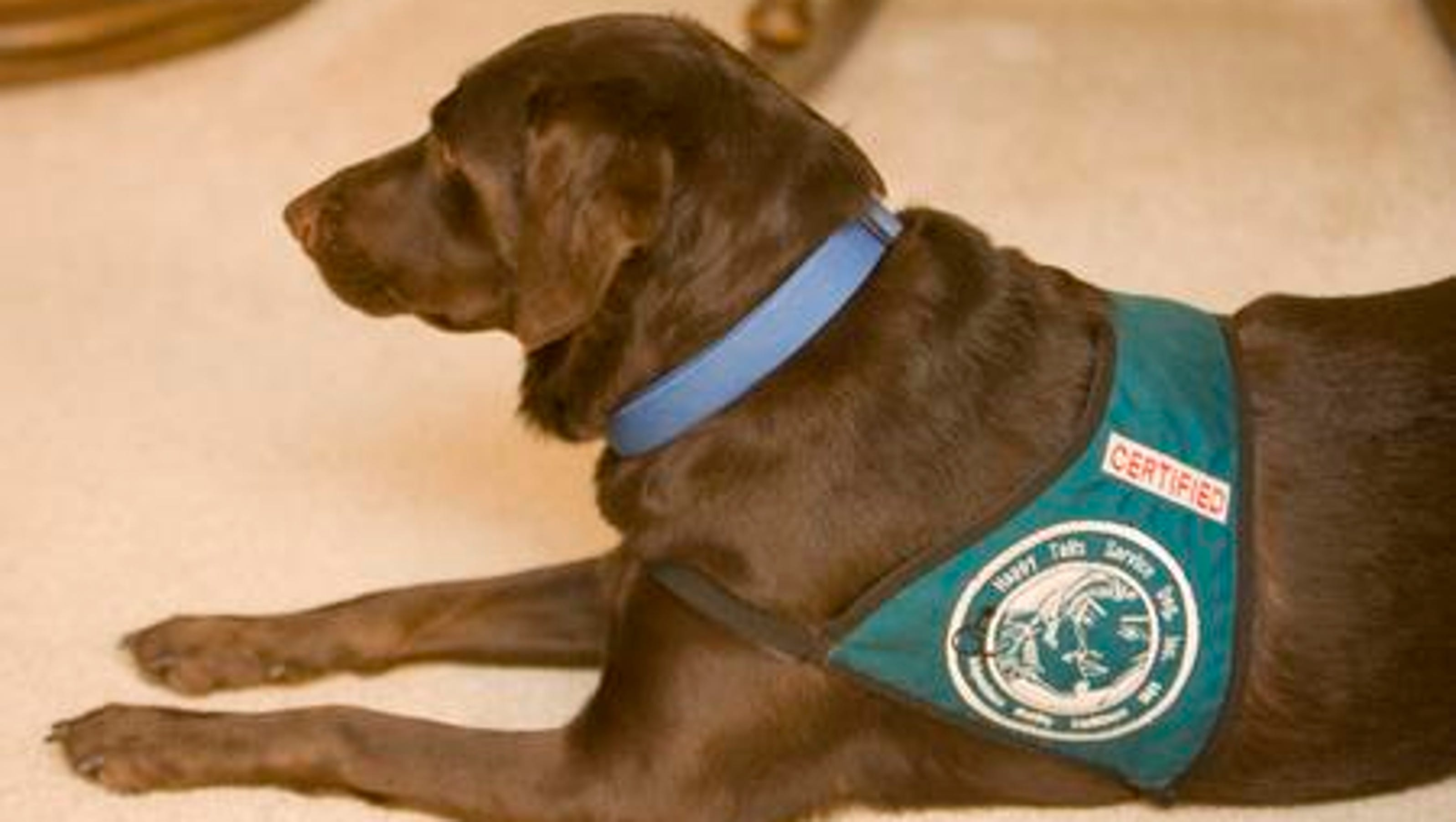 Rejected Service Dogs Where To Find