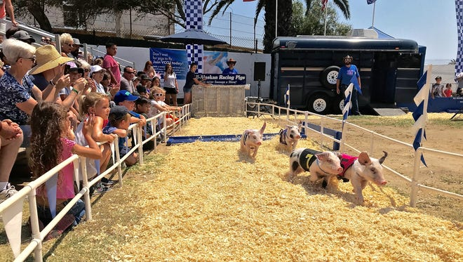 These are competitors in the pig races at the Ventura County Fair's Porker Flats.