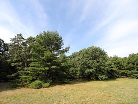 ASB 0617 OC trees