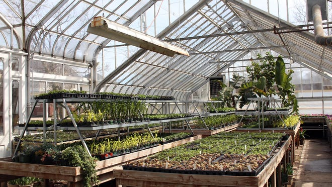 Plants grow in one of the city of Holland's State Street greenhouses on April 26, 2018. Use of the greenhouses has been discontinued since the completion of a new greenhouse building near the city's parks and cemeteries campus on 24th Street.