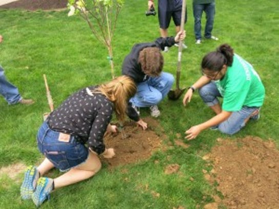 York College students plant a flowering dogwood on the York College campus.