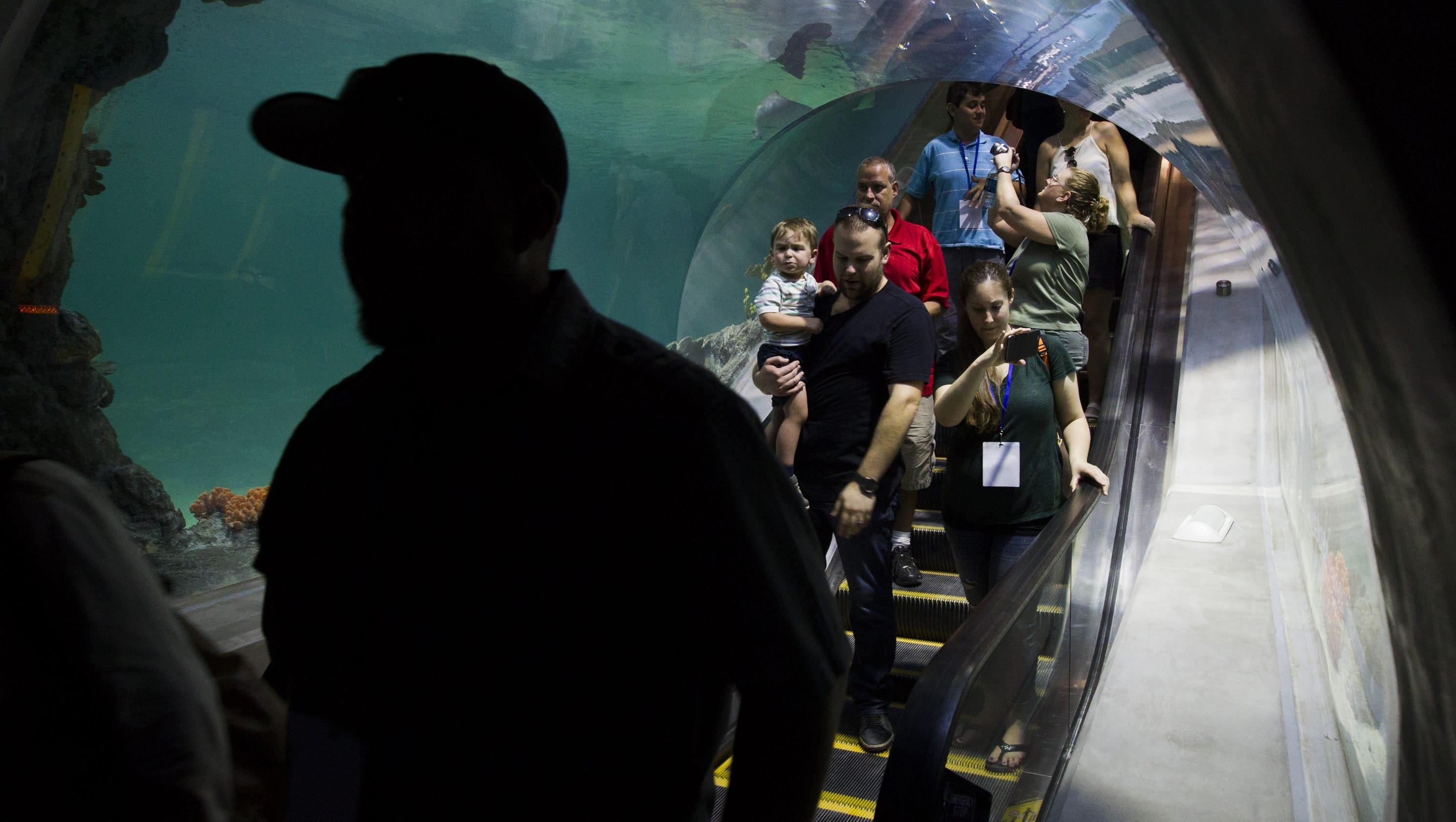 Odysea Aquarium Unveils Mystery Exhibit At Grand Opening