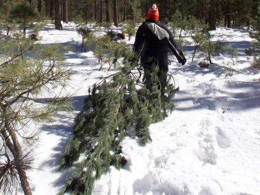Here's How To Get A Permit For Cutting A Holiday Tree In