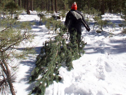 Apache-Sitgreaves National Forest is one of several national forests in Arizona offering tree cutting for the holidays through permits.