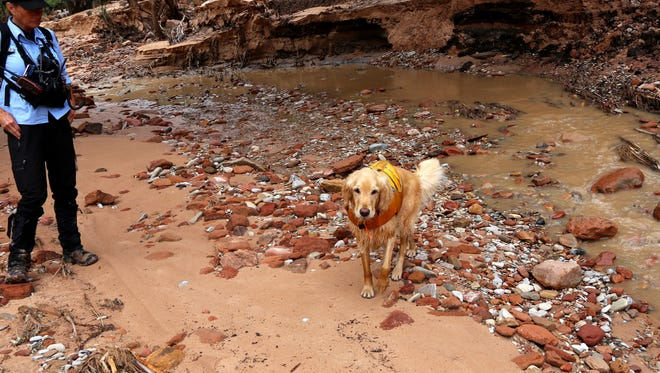 A search dog named Scout helped rescue crews scour the flood-torn banks of the Virgin River and other waterways in Zion National Park on Wednesday. A group of seven hikers from California and Nevada have turned up dead or missing after a flash flood hit the area late Monday.
