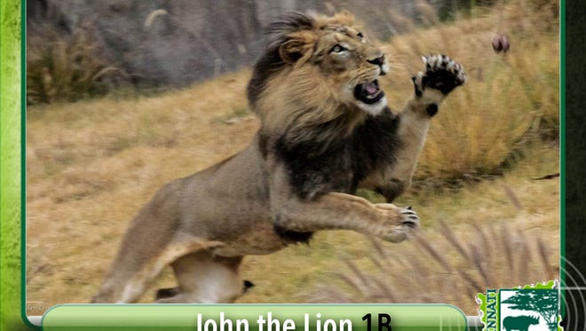 """A faux-baseball card of the Cincinnati Zoo's """"John the Lion"""" was distributed by the zoo online over the weekend."""