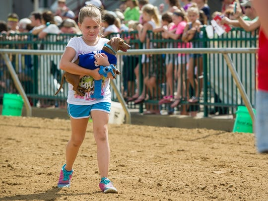 Regan Duff, 9, of Henderson, walks with her three-year-old dachshund named Izzie, during wiener dog racing trials at Ellis Park in Henderson, Saturday, Aug. 20. 2016. Winners from Saturday's races will compete in the finals on Aug. 27.