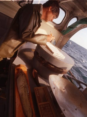 Jim Johnson, senior fishery scientist, takes notes of the day's catch while a burbot is being measured for length on the R/V Chinook on Sept. 1, 1998.