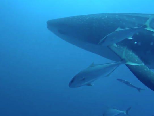 Scuba Diving Off Marco Island