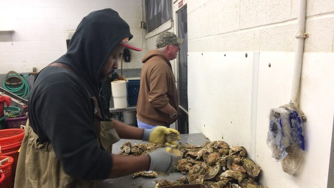 Hand-shucking is still an important part of the aquaculture business at Tom's Cove Aquafarms.