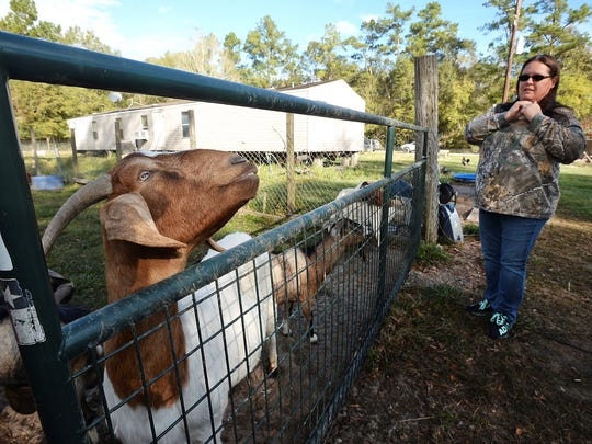 Deanna Coburn, owner of Cozy Critters Farm near Sour Lake Texas, talks about the long-term effects Tropical Storm Harvey continues to have on her animals months after the storm.