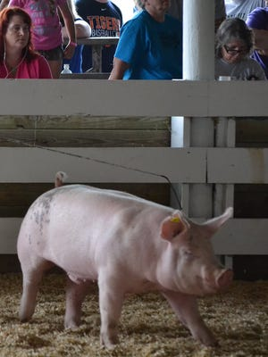 Two cases of influenza A have been confirmed in people exposed to swine at the Fowlerville Family Fair in Livingston County.