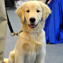 """On Thursday, November 19, the """"Santa Paws Holiday Open House"""" was held. The event was held at PAWS Assistance Dogs Training Academy"""