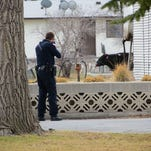 PHOTOS: Idaho cops kill cow after crazy chase