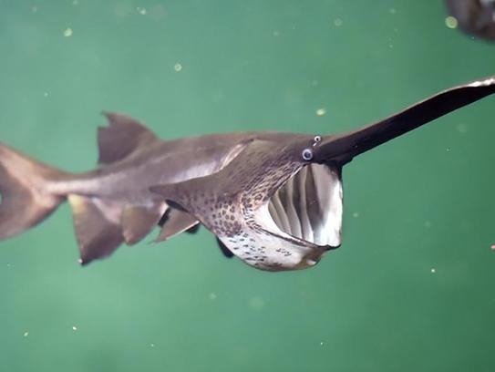 Image Result For Jackson Ms Aquarium