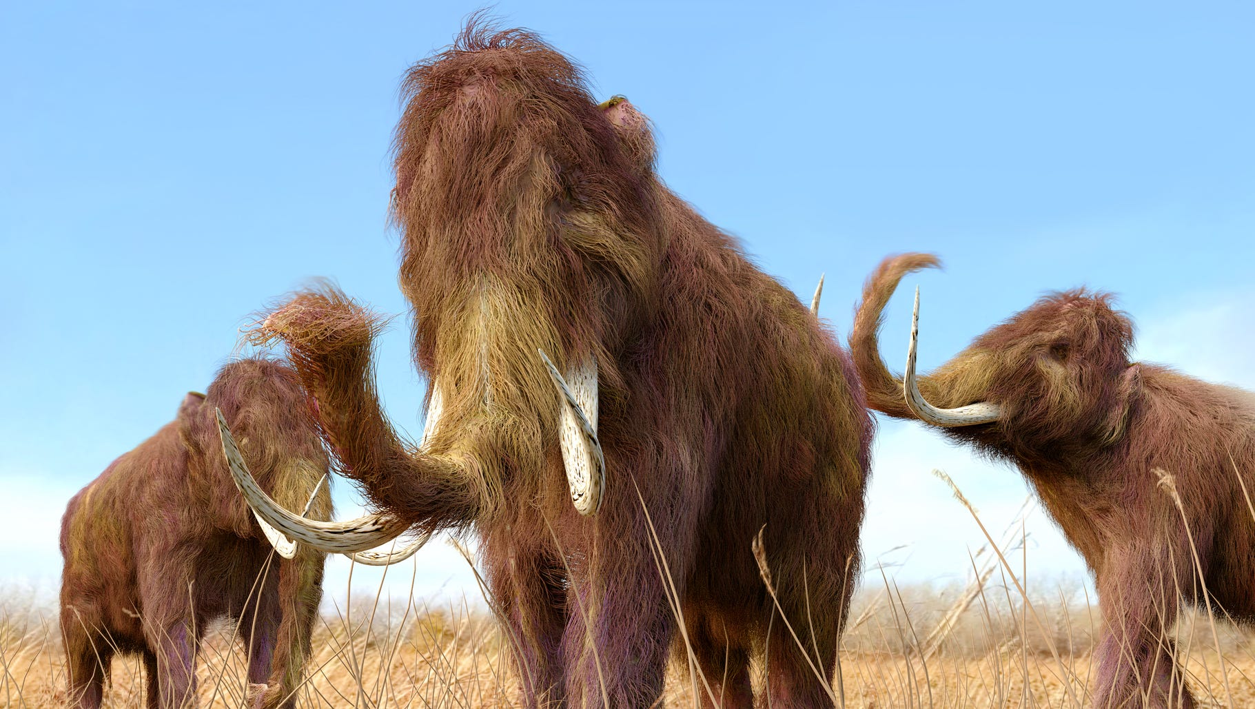 Woolly mammoth may return to Arctic after company edits elephant DNA