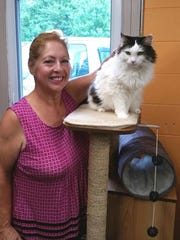 Penny, a cat, was adopted from the Edison Animal Shelter