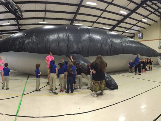 A panoramic image shows a life-sized blue whale model