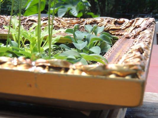Mouse Ears Gardening With Mini Hostas