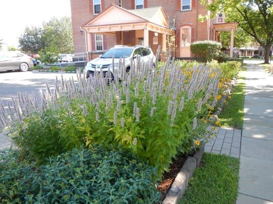 A rain garden at the Ulster County Office Building in Kingston provides eye-catching landscaping while allowing collected rain water to permeate into the ground.