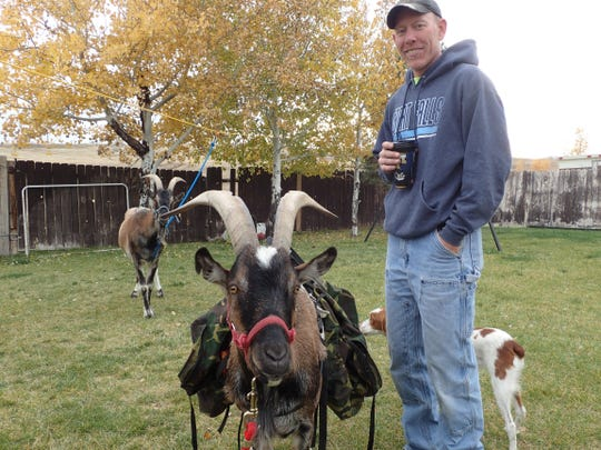 Aaron Turner has used alpine goats to pack food and
