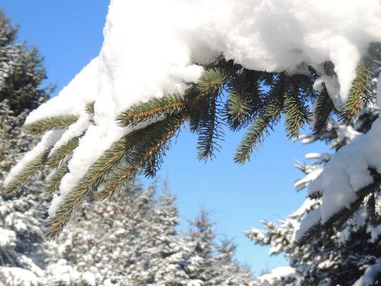 APC FALL 2014 Winter Beauty 2.JPG