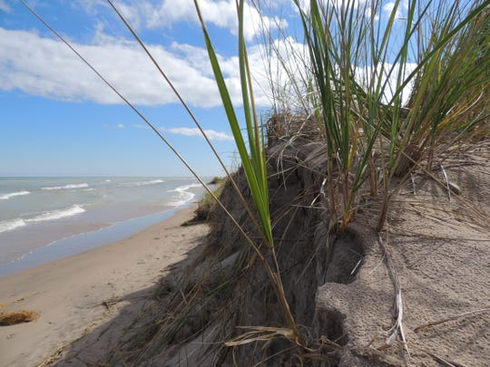 Erosion of the sand dune habitats at Point Beach and other locations along the shore is a top concern of researchers and biologists. Many rare and endangered plant species seen among the dunes are found nowhere else in the state, including sand willow, dune goldenrod and dune thistle.