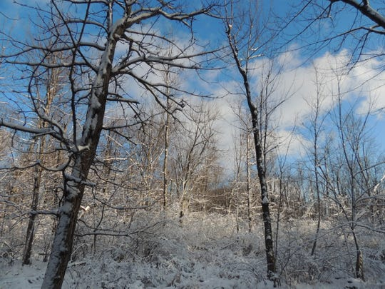 Explore the winter forest and learn to read the stories of winter wildlife as they move about, feed and rest in a beautiful, though challenging, winter wonderland.