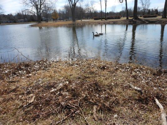 DCA 0418 Little Lake Geese.JPG