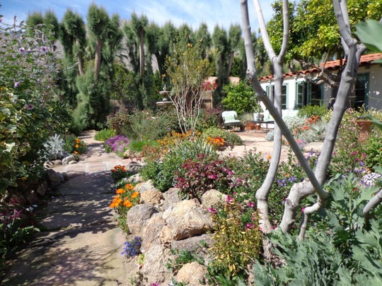 Many drought resistant perennials thrive in the desert for brilliant color year-round.