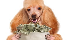 Dogs may cost more than you think to take care of.