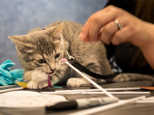 Troy police cat Pawciffer Donut makes an appearance at the Michigan Humane Society Berman Center for Animal Care kitten baby shower in Westland, MI Sunday, June 10, 2018.