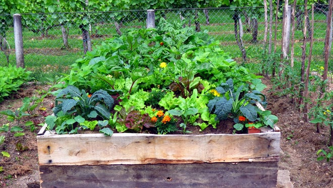 Vegetable gardens in raised boxes are a good idea in Colorado soil.