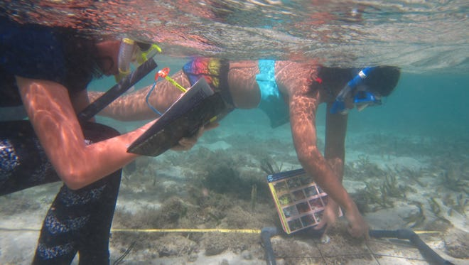 Guam Community Coral Reef Monitoring Program volunteers in Piti use a grid-by-grid data gathering method called Benthic survey. As they go over a section, they take pictures and note the contents in each square.