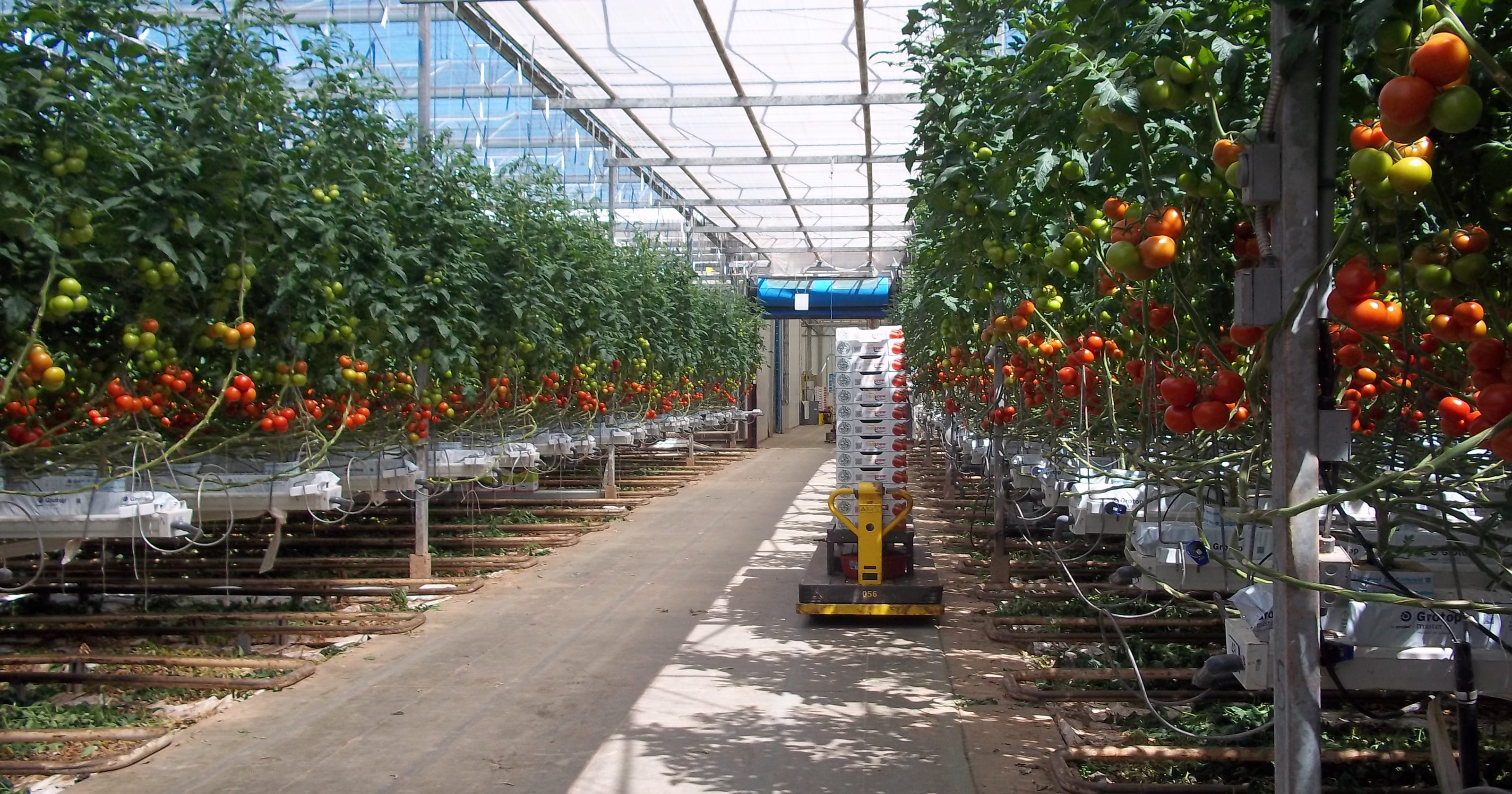 Town board takes next step on tomato project