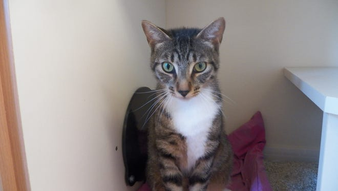 Hi, I'm Tigger, and I am a very sweet boy who enjoys playing with my box of toys.