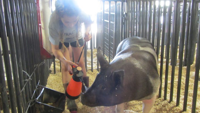 Don't forget to take a spin through the animal buildings when you visit the Montana State Fair.