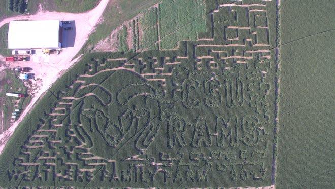 Weathers Family Farm in Yuma has grown a corn maze  in the shape of a CSU Ram.