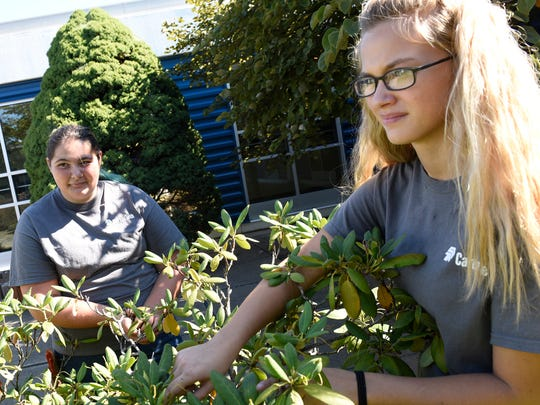 Students Rebecca Gabler, left, and Emily Rosenberry, both 15, trim bushes in their landscaping class at Franklin County Career and Technology Center. Enrollment is increasing and more programs are being offered at the school.