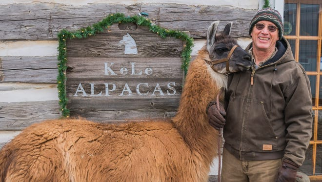 Abstract, also known as Lucky Llama, stands with his owner, Keith Bancroft, of KeLe Alpacas in Kewaunee.