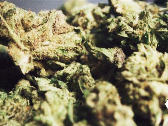 GG Strains' Gorilla Glue #4 hybrid marijuana bud.