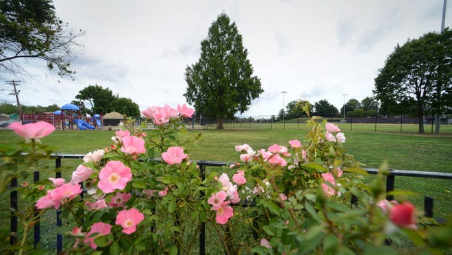 The fenced-in rose garden at Nash Park in Clifton.