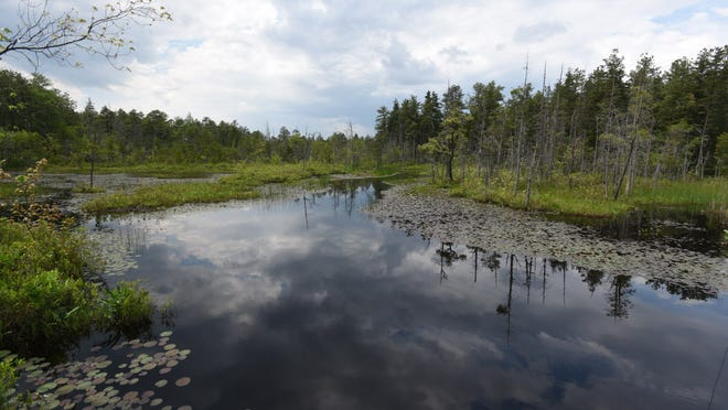 Rivers and creeks intersect roads throughout the Pinelands — also known as the Pine Barrens, which is 1.1 million acres of dense forests, rare plants and animals and miles of blueberry fields and cranberry bogs.
